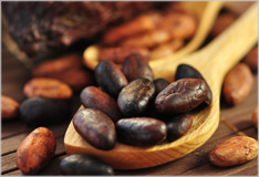 Cocoa – food of the gods