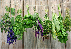 Fresh herbs bring variety to the kitchen