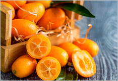 Kumquats – mini citrus fruits from south east Asia