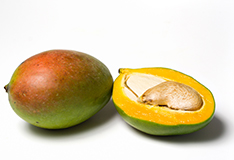 The mango – queen of fruits