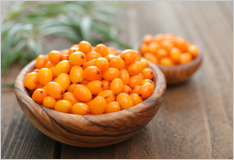 The sea buckthorn is ripe