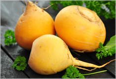 Turnips and swedes – winter root vegetables