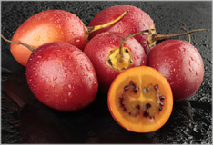 Tamarillo – tree tomato from the Andes