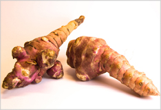 Topinambour or Jerusalem artichoke – an arrival from North America