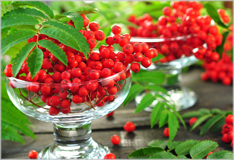Rowanberries: Something to forage for in autumn