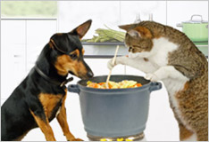 Cooking for your four-footed friends