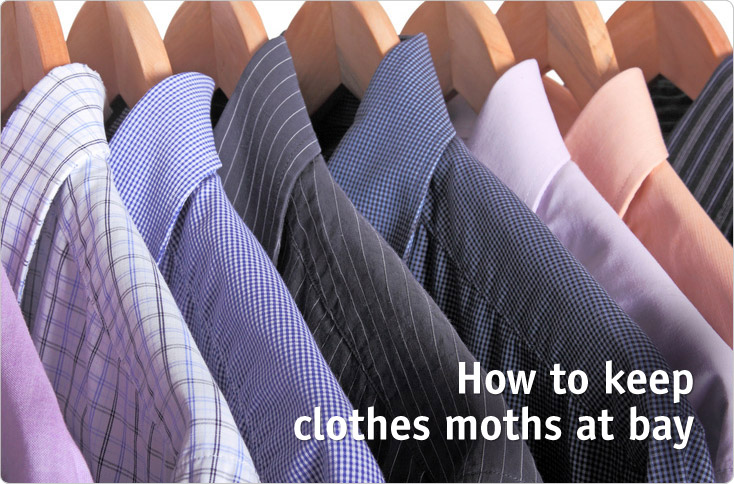 Clever Storage How To Keep Clothes Moths At Bay